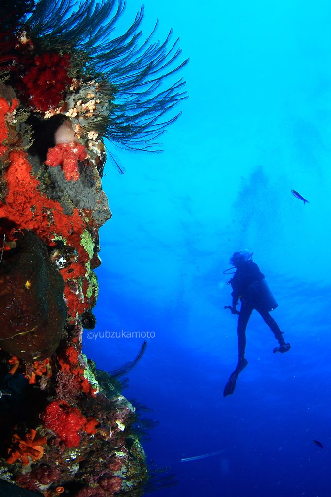deepbluesea south bolaang mongondow regency north sulawesi - indonesia