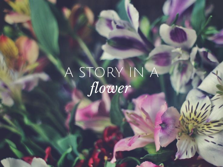 A story in a flower