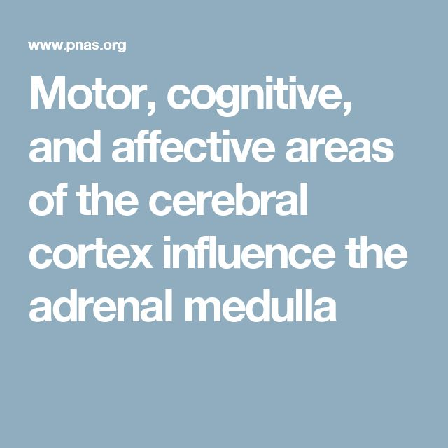Motor, cognitive, and affective areas of the cerebral cortex influence the adrenal medulla