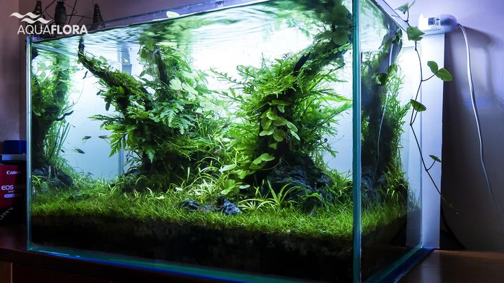 Aquaflora                                                                                                                                                                                 More