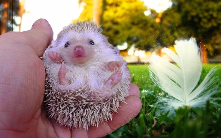 TOP 10 CUTEST ANIMALS: hedgehog, flying squirrel, Rabbit, Guinea pig