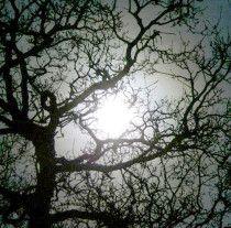 December Full Moon   Names: Full Cold Moon, Long night's Moon,               Oak Moon
