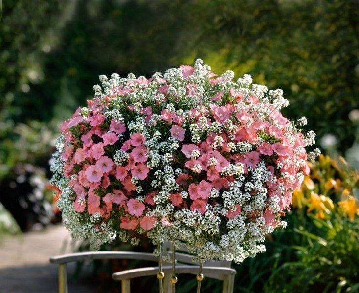 Balkon W Kwiatach 21 Komentarzy With Images Rosliny