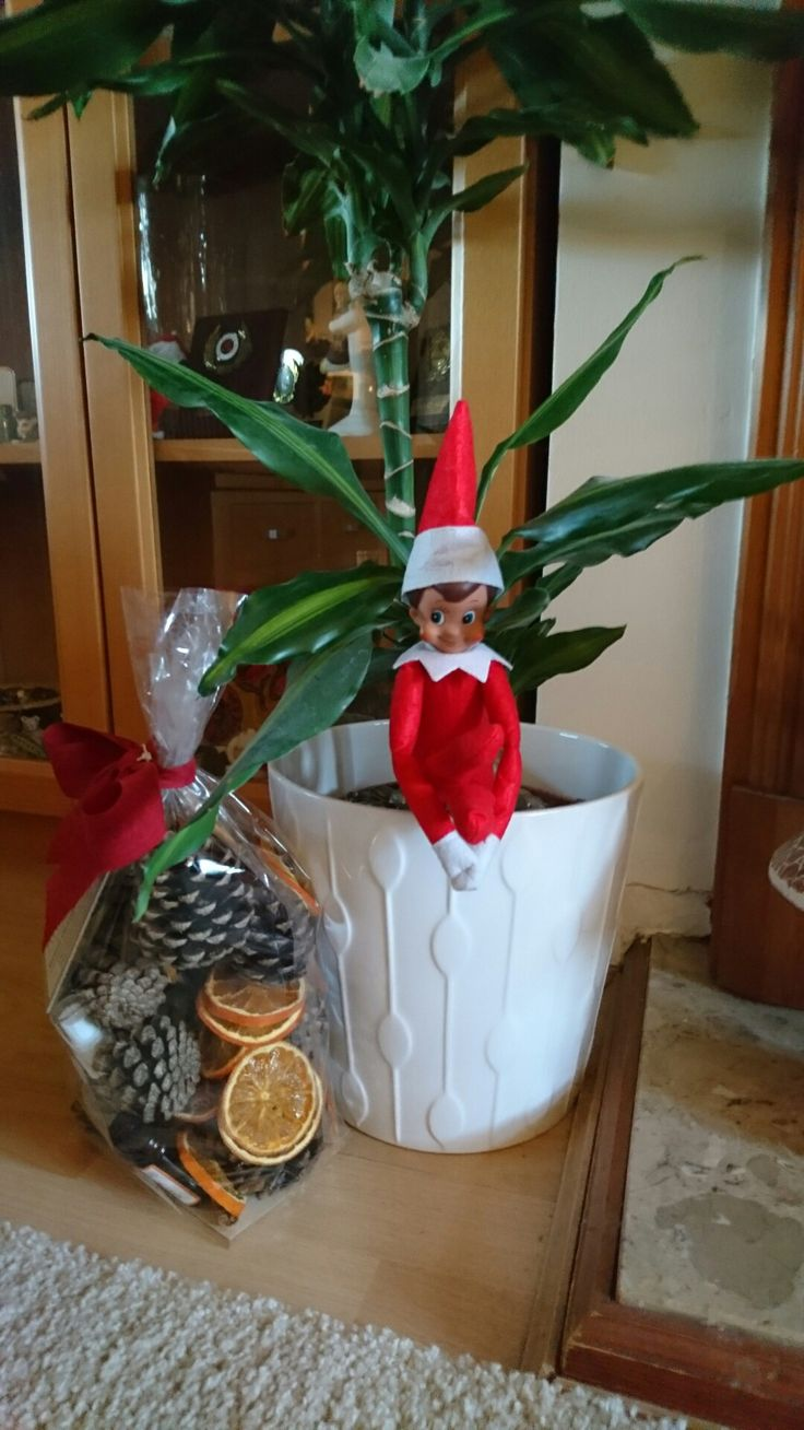 Elf on the Shelf Day 14: Watching the world go by