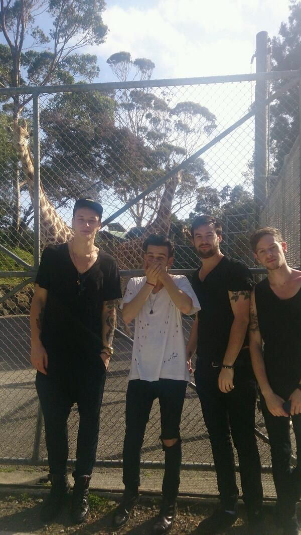 When The 1975 saw giraffes and Matty got all excited. This is so fricking cute<<<<<<<OMG GIRAFFES ARE MY FAVORITE ANIMALS>>>>>>