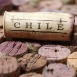 Chile's Future is Cabernet Franc | Great Wine News