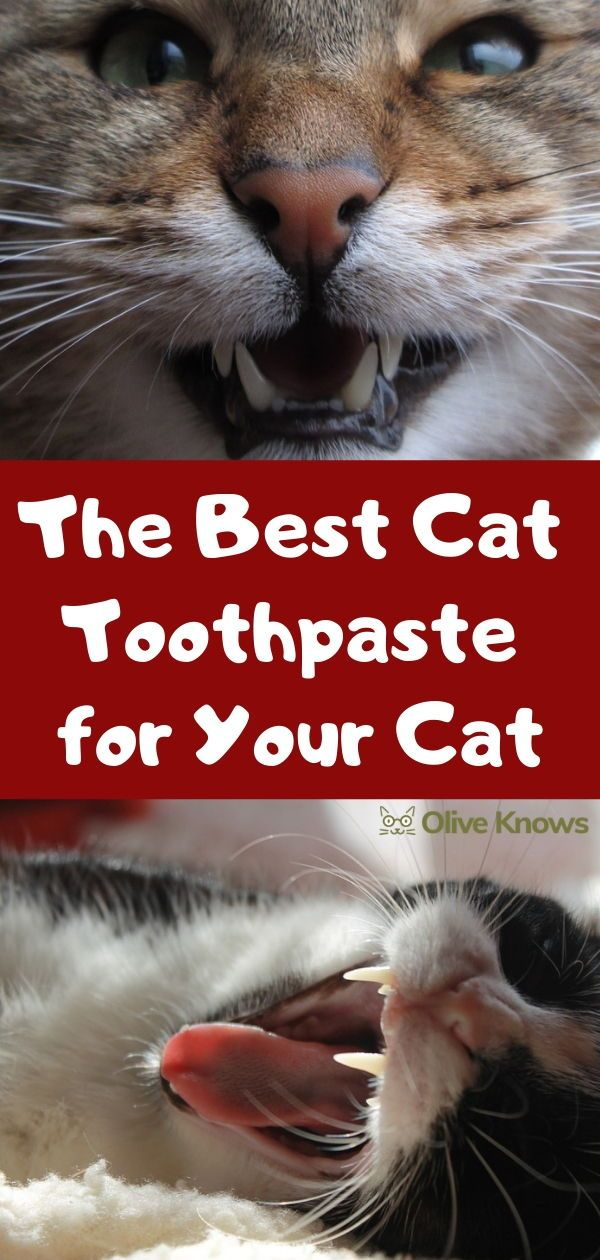 The Best Cat Toothpaste For Your Cat Cool Cats Cats Sick Cat