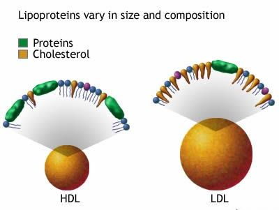 LDL Cholesterol in Women of all ages