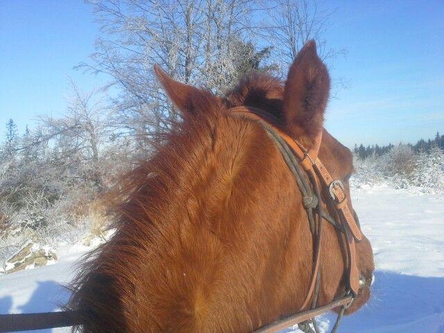 Zima z konského chrbta 🏇