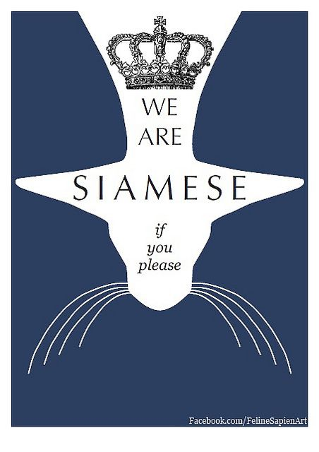"""""""We are Siamese if you please"""" Siamese cat giclee art print by Feline Sapien. Available on Etsy and eBay."""