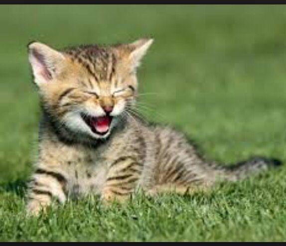 Laugh! Laugh! Laugh!