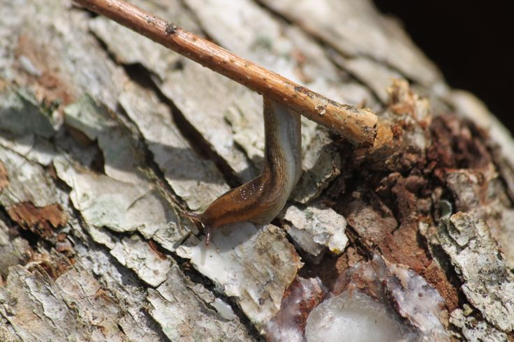how to get rid of mushrooms in garden