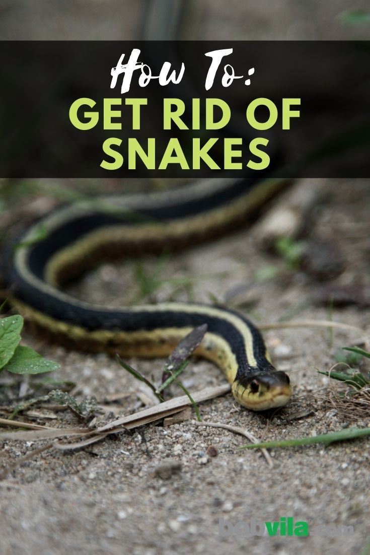 9fd807bd916c412d9f193faa61ef13dd - How To Get Rid Of Copperhead Snakes In Your Yard