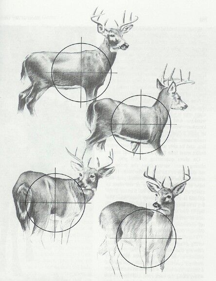 Deer hunting diagram, for my little man's first hunt. Deer Hunting Secrets - http://smal.in/DeerHunting