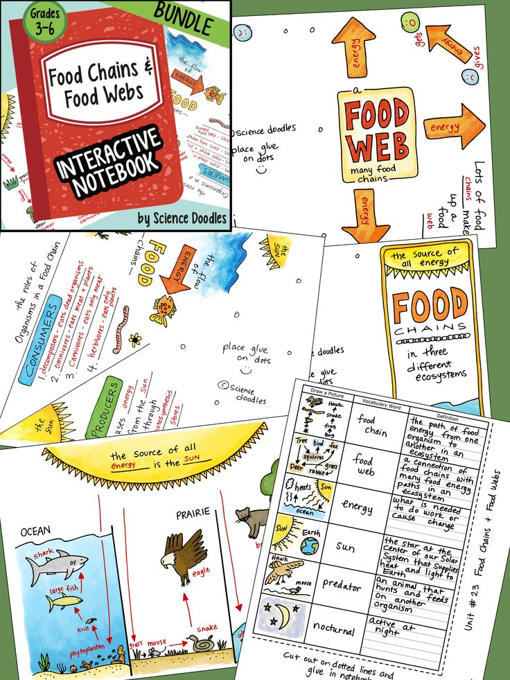 Food Chains and Food Webs Interactive Notebook BUNDLE by
