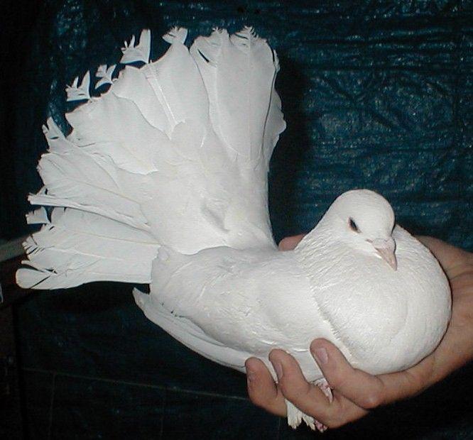 الحمام Image Search Ask Com Birds Bird Animals