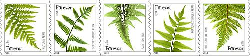 Great news! The Ferns stamps that you all love so much are now available at the Forever® rate. Stock up today.