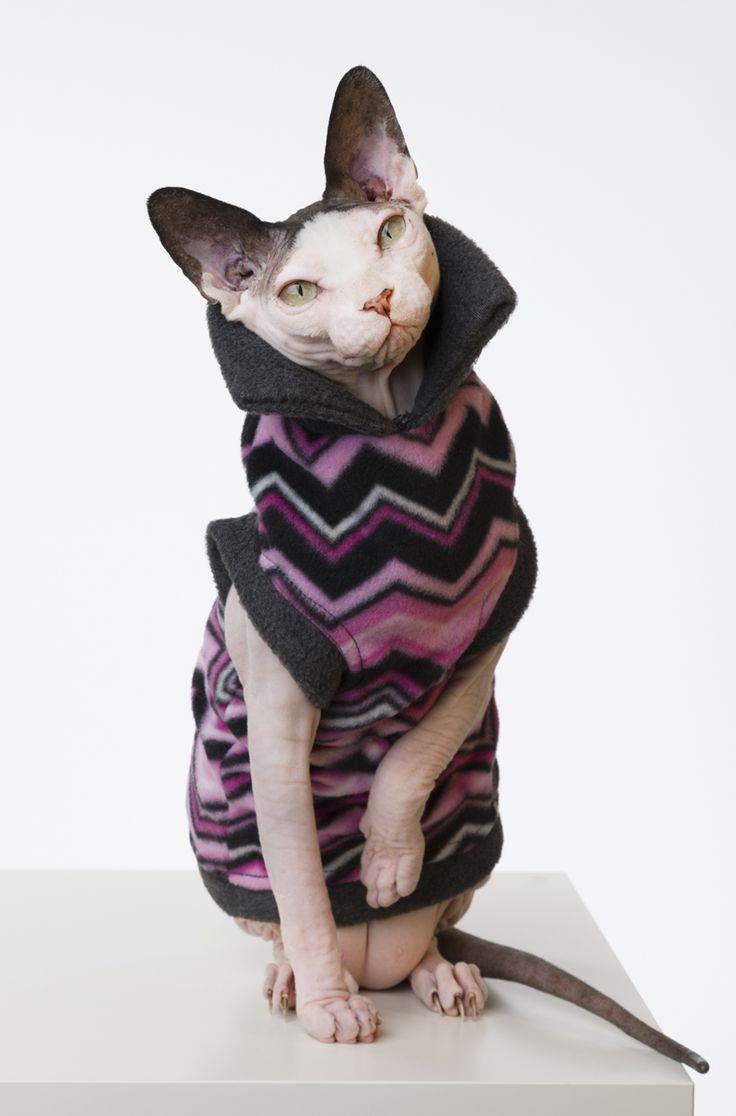 Sphynx Cat Wear, the Original sphynx clothing company.