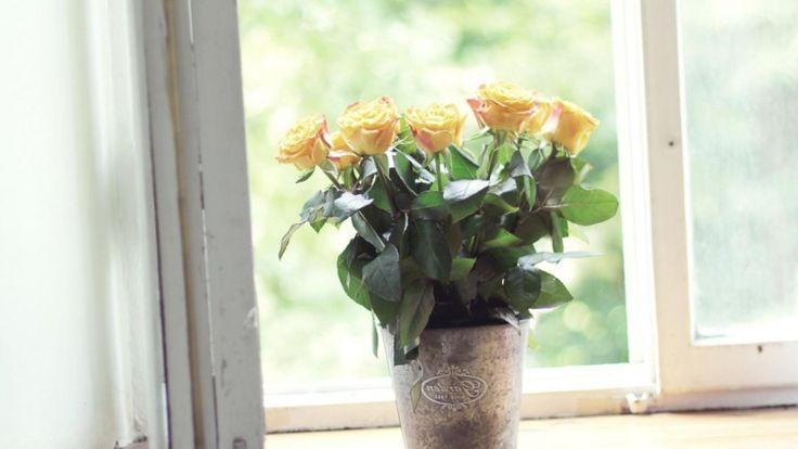 Roses 890