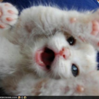 so sweet:): Cuteness, Meow, Adorable Kittens, Baby Kittens, Baby Animals, Kittens Cats, Animals Cats, Kitties, Kitty