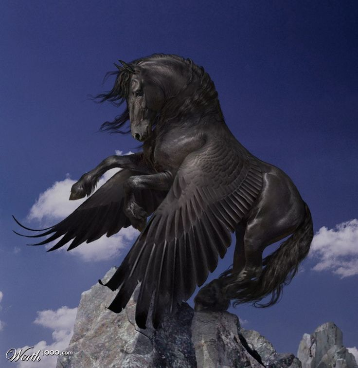 The black foal of Anok--all grown up!  perch - Worth1000 Contests