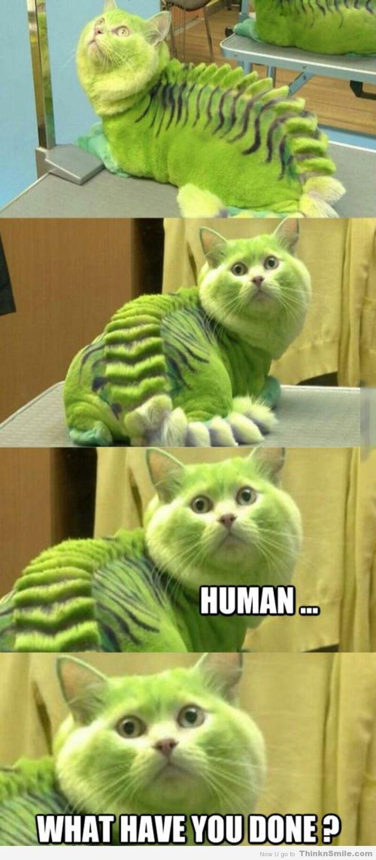 Adventures in Cat Shaving