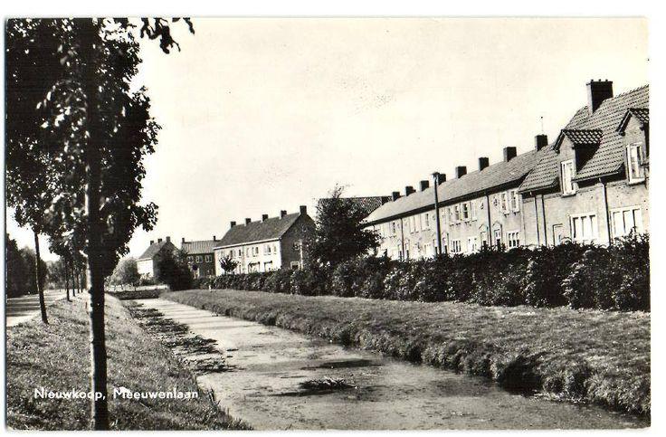 Meeuwenlaan 1960