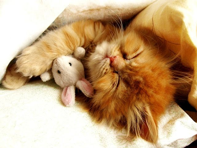 Kitty and Bunny Sleeping | Animals and stuffed toys (30 pictures)