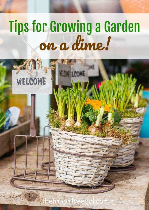 Centsible Gardening 101: Tips for Growing a Garden on a Dime