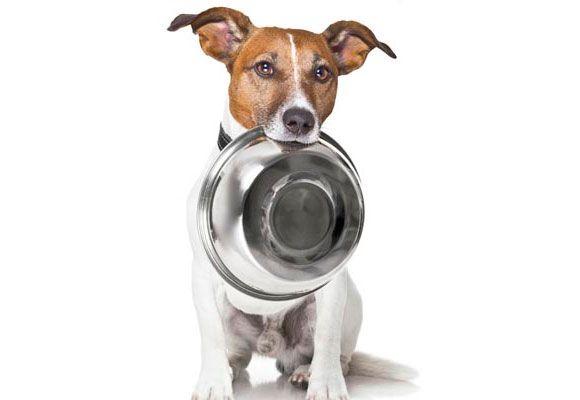 Como fazer um Cupcake de abobora para seu cachorro! » Cães Online