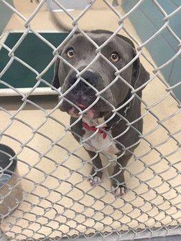 Staten Island Animal Shelter No Kill