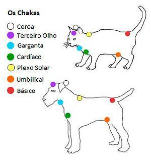 Terapias Holísticas | Brasília | Reiki em Animais