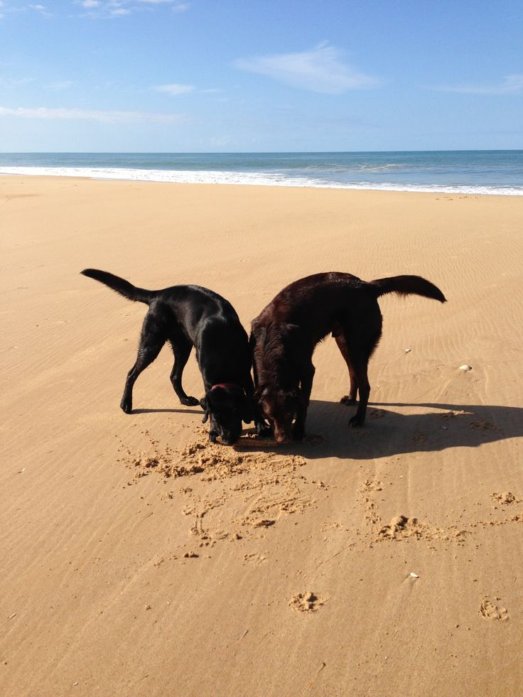 Charlie and Koby having fun at the beach.