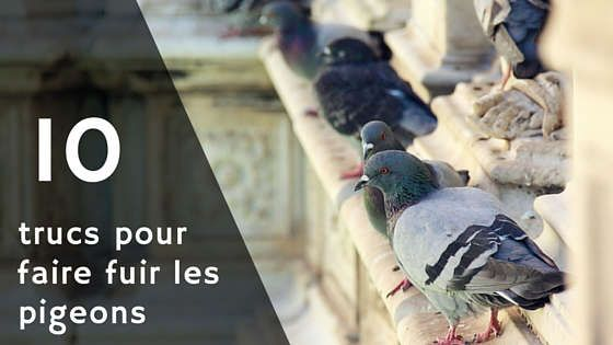 r pulsif pigeons voici 10 trucs pour faire fuir et faire peur aux pigeons animal insecte. Black Bedroom Furniture Sets. Home Design Ideas