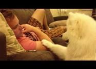 Ladrar o llorar, babeo excesivo, accidentes en la casa y comportamiento destructivo son signos de ansiedad por separación en tu perro.