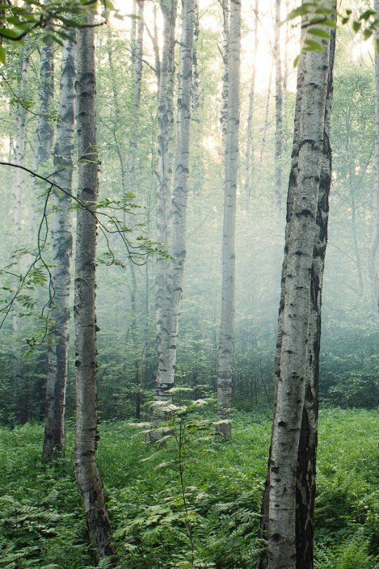 Foggy forest by Pavel Lichtenberg