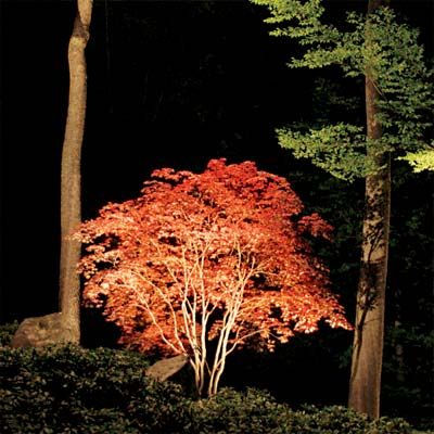 Photo: George Gruel | thisoldhouse.com | from All About Landscape Lighting