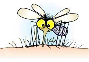 6 astuces pour dormir en paix sans moustiques