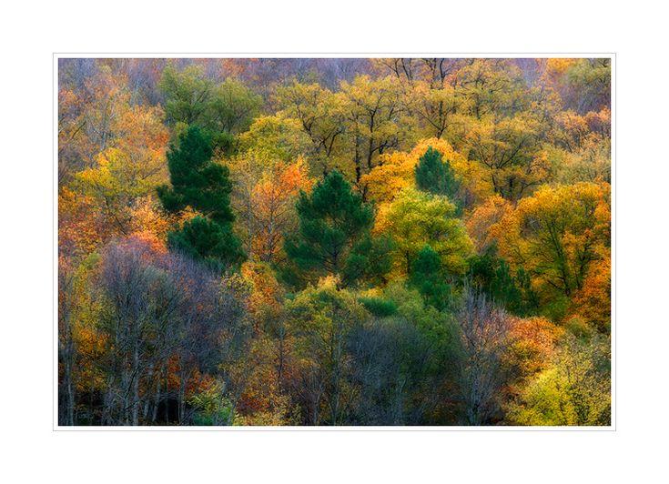 :: Outono ::