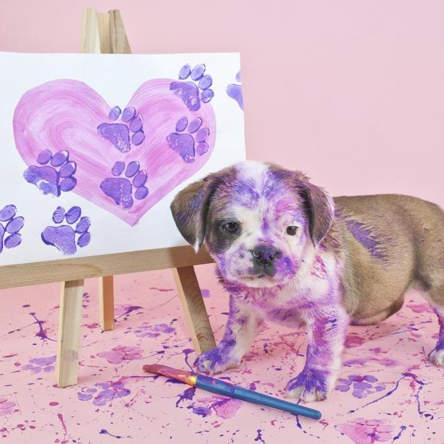 Even with non-toxic paints, limit paint to the paws for easier cleanup.