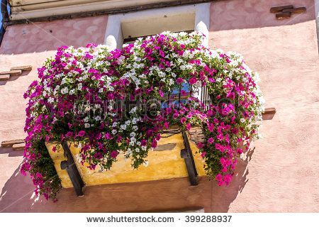 #flowered #balcony #violet #flowers #nature #building #house
