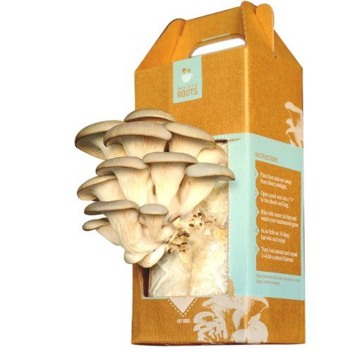 Back to the Roots Oyster Mushroom Kit One Oyster Mushroom Growing Garden Kit from Back to the Roots. Everything you need to grow and harvest mushrooms in as few as 10 days. Three simple steps: open box, mist with water, harvest the crop. Kit contains recycled coffee grounds for soil, pearl oyster mushroom spawn (seed), and spray mister. Harvest up to 1.5 pounds of oyster mushrooms per box. Please ... #Back_to_the_Roots #Grocery