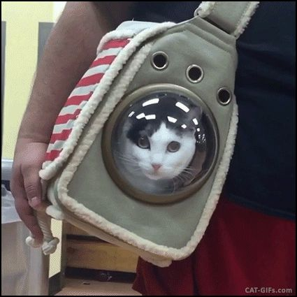 "Animated Cat GIF • Amazing 'Space' Cat carrier bag. Hang in there buddy. ""Are we going to Space or to… the VET? Tell me the truth."""