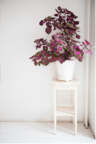 Add color to a corner, just with folage of a colorful plant.. like begonias or crotons https://www.fauxtreesnshrubs.com/s=croton&post_type=product