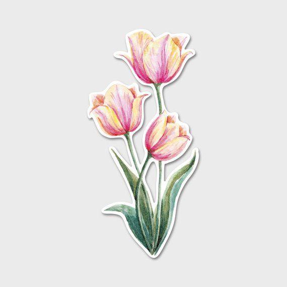 Flower Tulips Watercolor Bumper Sticker Decal Flowers Flower