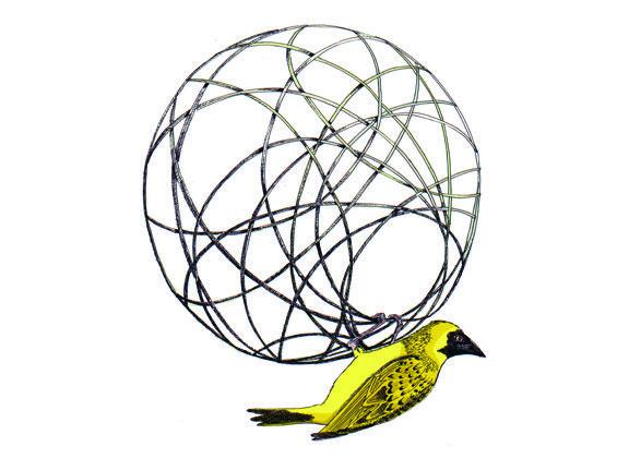 Masked Weaver building a nest hand drawn illustration