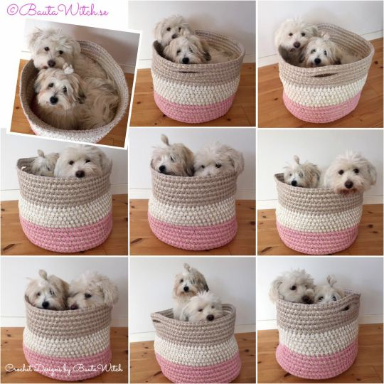 Modelling Mummys latest crochet design - a storage basket. We are Coton de Tulears and dead cute!