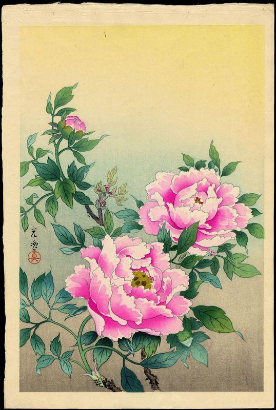 Peonies by Koitsu, Tsuchiya (1870-1949)