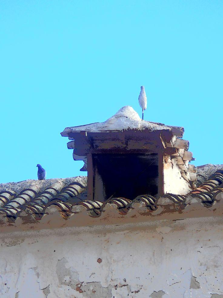 Tembleque: Dos palomas muy distintas en un tejado