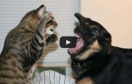Cat & Dog playing Together Funny Videos